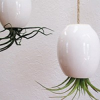Air-Plant Pods by Mudpuppy